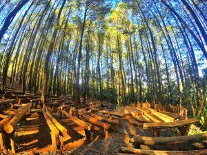 Outbound di Hutan Pinus Mangunan Imogiri Yogyakarta